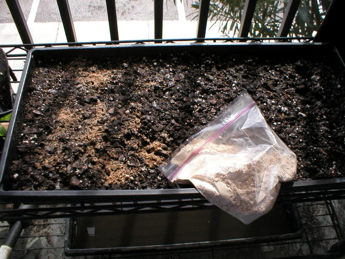 How to grow wheatgrass growing instructions with pictures for Soil mineral content