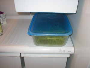 refrigerating wheatgrass