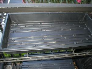 wheatgrass-growing-tray