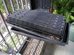 wheatgrass-growing-tray-set-up