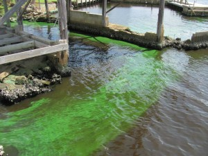 St Lucie River pollution